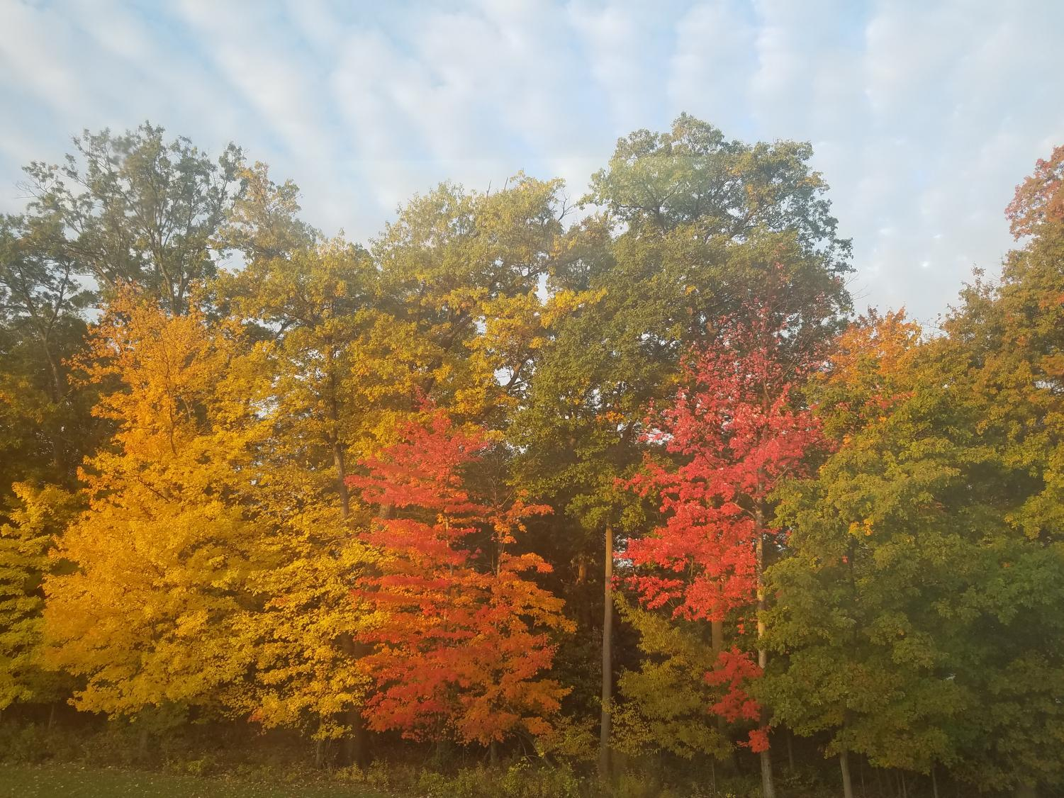 A Look at WHS's Beautiful Fall Trees